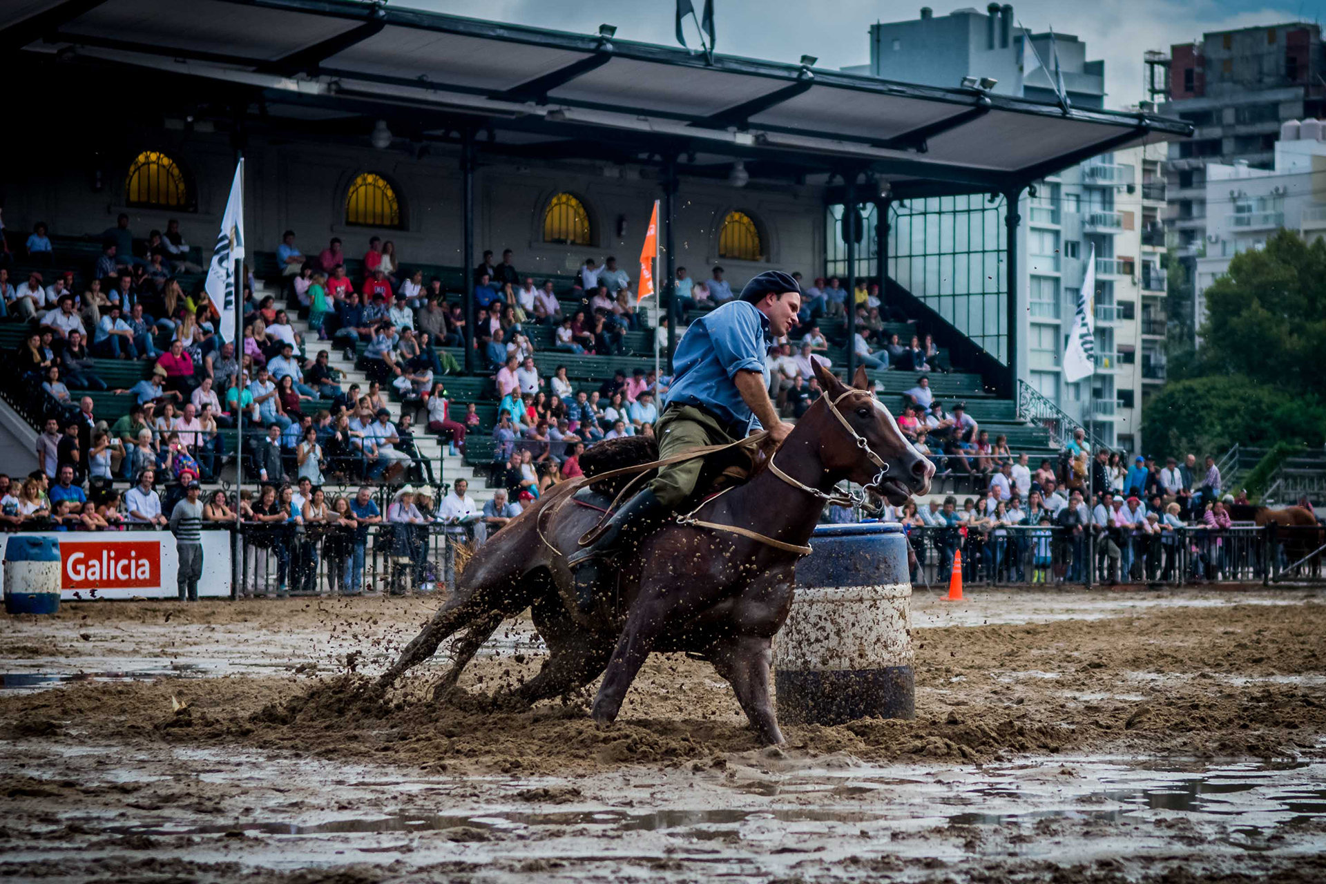 La Expo<br><strong>Nuestros Caballos</strong>